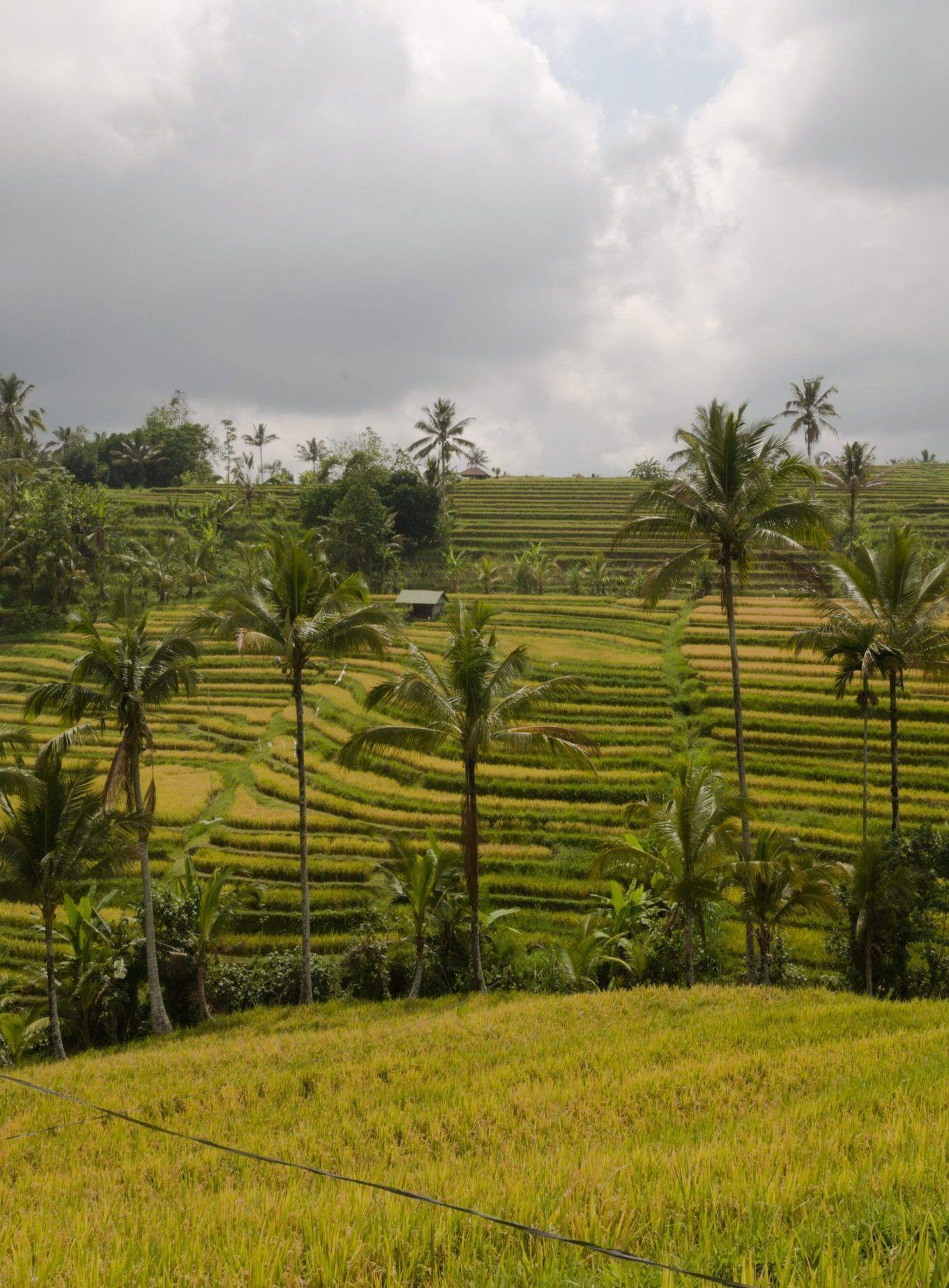 ruta de 18 dias por indonesia