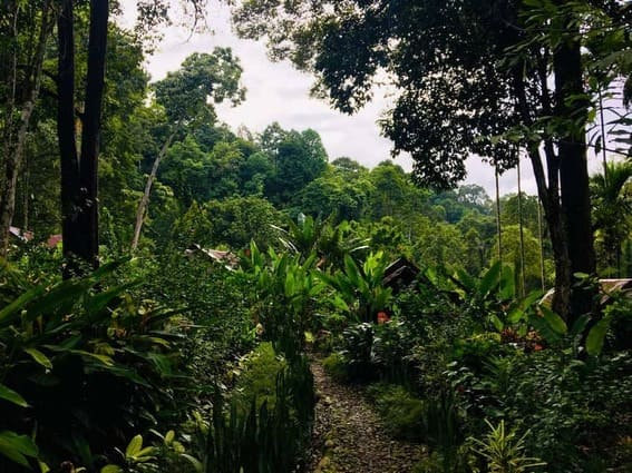 trekking con orangutanes