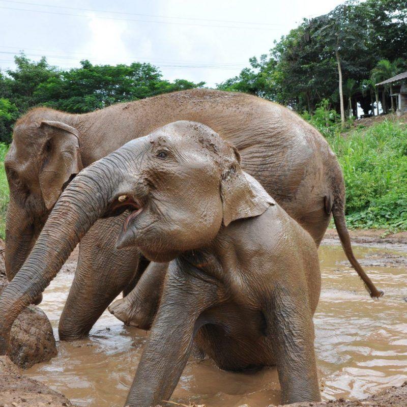 que ver en tailanadia